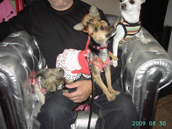 """VOS COMPAGNONS CHEZ """"DOGS STARS"""""""